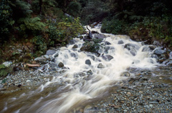 Stream beside Anakoha Road, outer Marlborough Sounds